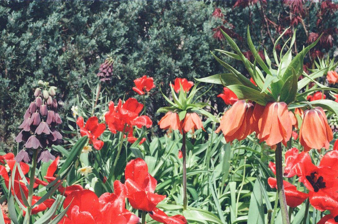 brooklyn_plant_studio_garden_32.jpg