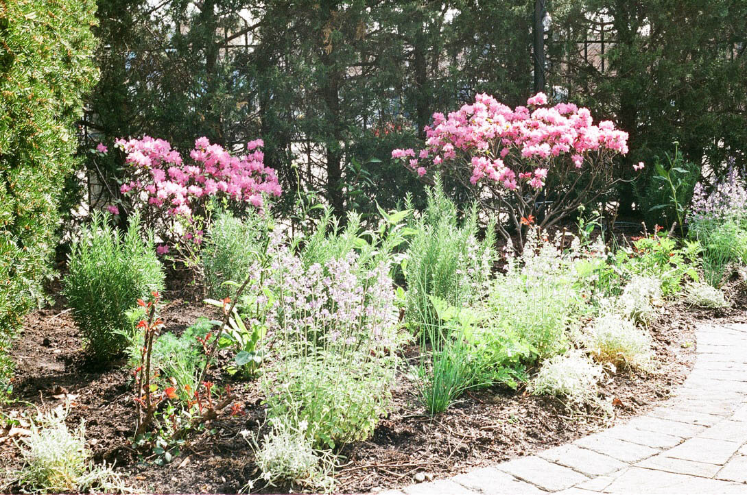 brooklyn_plant_studio_garden_35.jpg