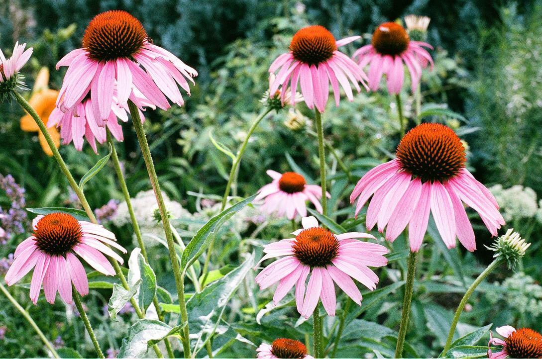 brooklyn_plant_studio_garden_36.jpg