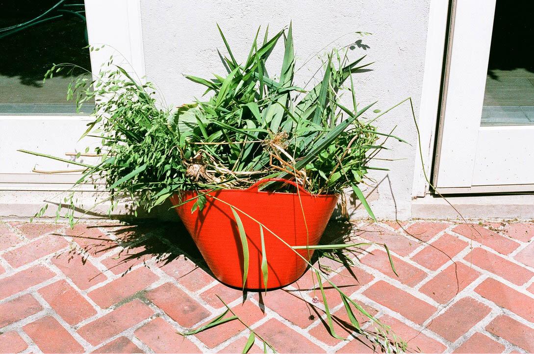 brooklyn_plant_studio_garden_38.jpg