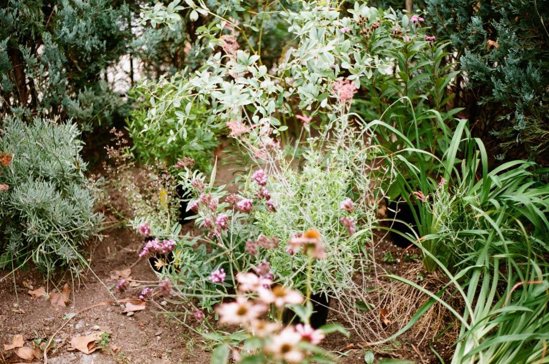 brooklyn_plant_studio_garden_40.jpg