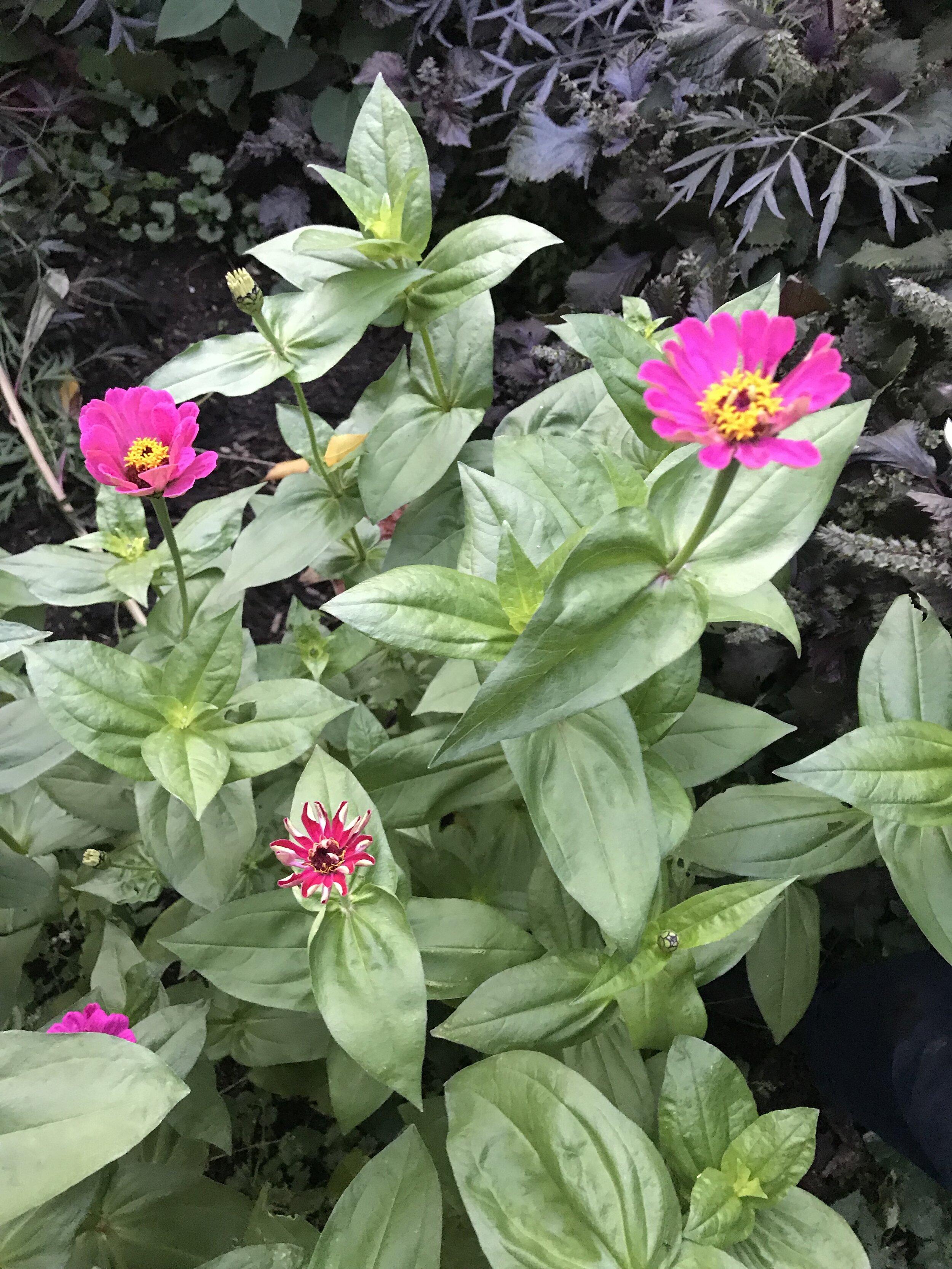 brooklyn_plant_studio_garden_44.jpg