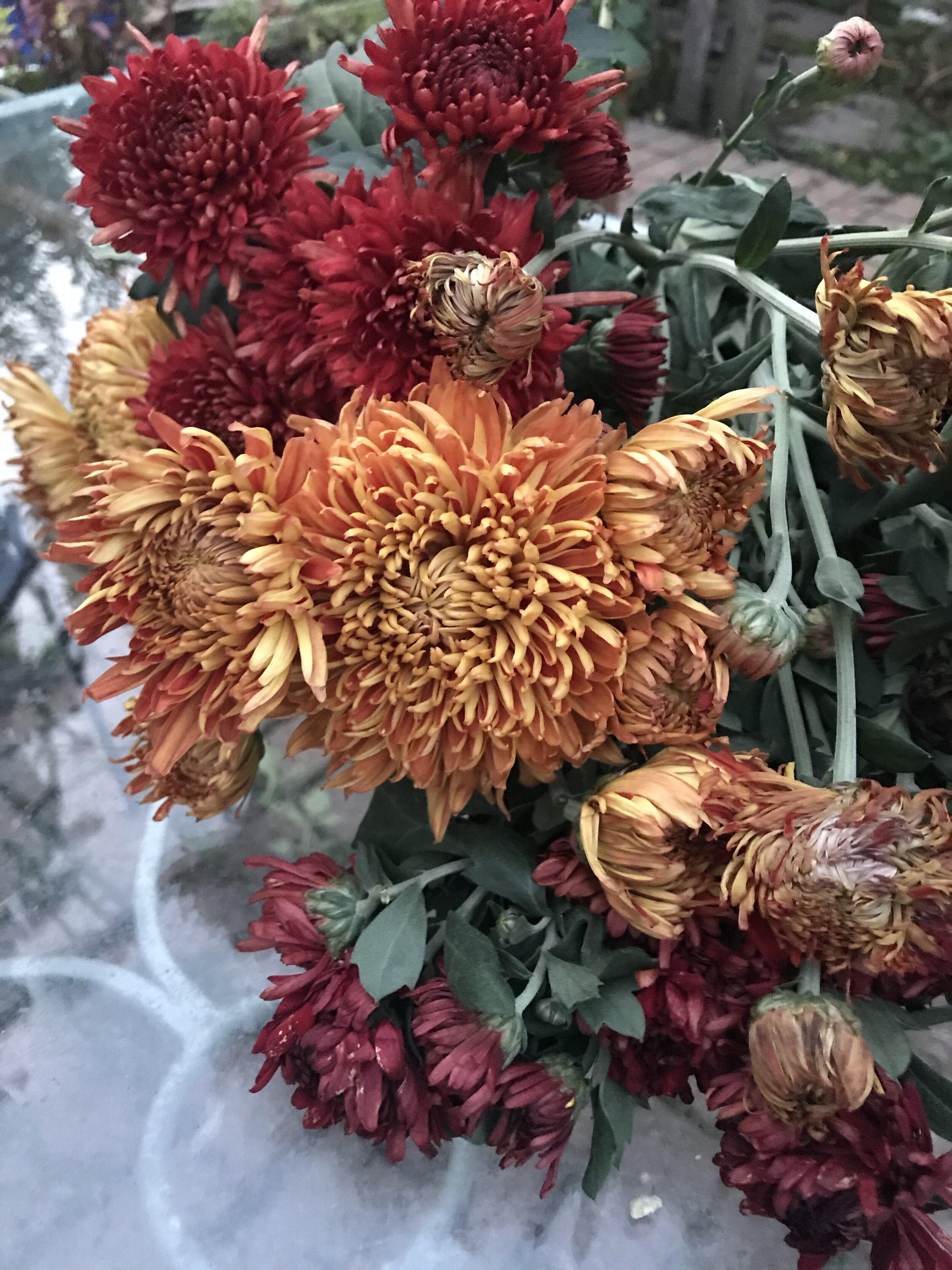 brooklyn_plant_studio_garden_47.jpg
