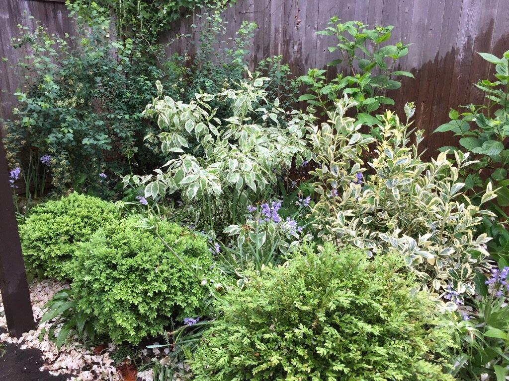 brooklyn_plant_studio_garden_65.jpg