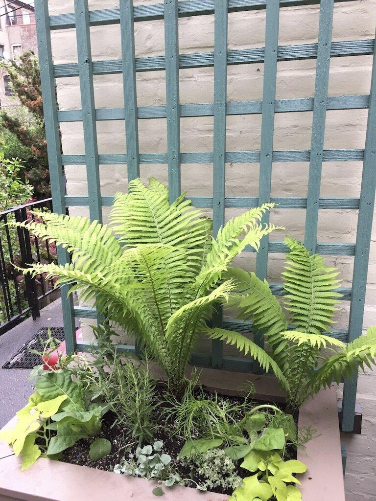 brooklyn_plant_studio_garden_66.jpg