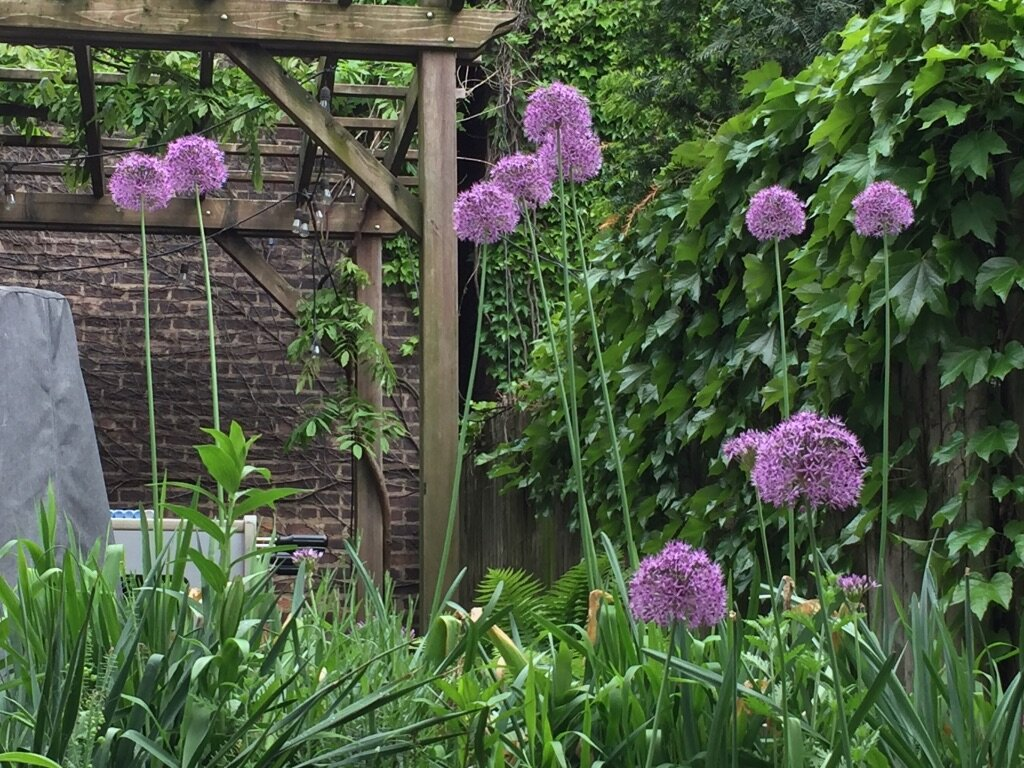 brooklyn_plant_studio_garden_67.jpg