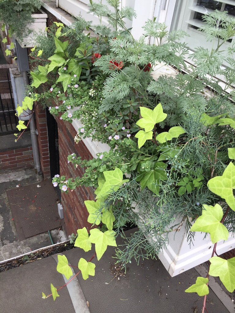 brooklyn_plant_studio_garden_69.jpg