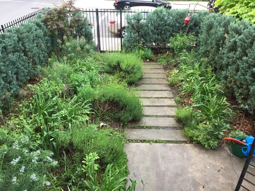 brooklyn_plant_studio_garden_78.jpg
