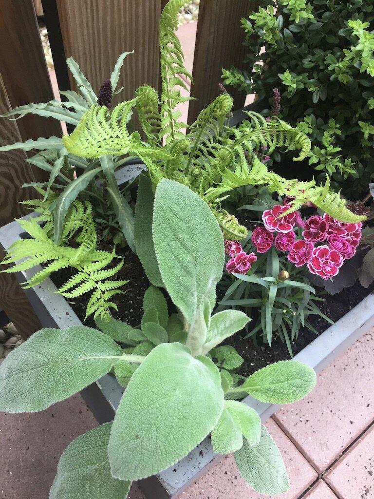 brooklyn_plant_studio_garden_95.jpg