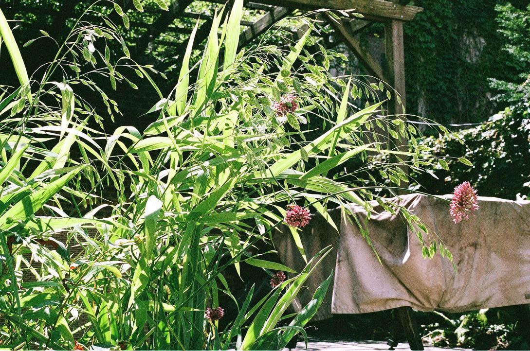 brooklyn_plant_studio_garden_100.jpg