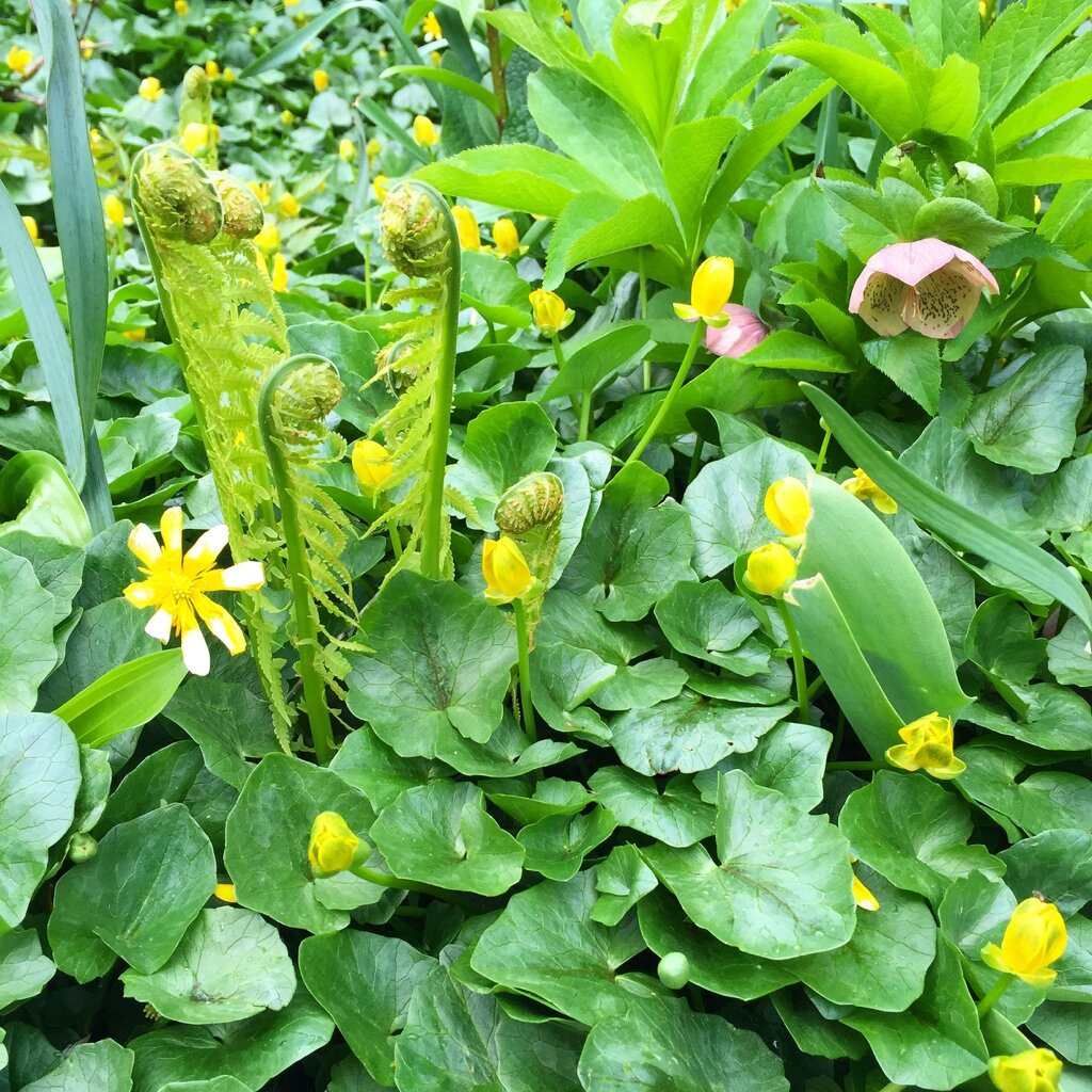 brooklyn_plant_studio_garden_103.jpg