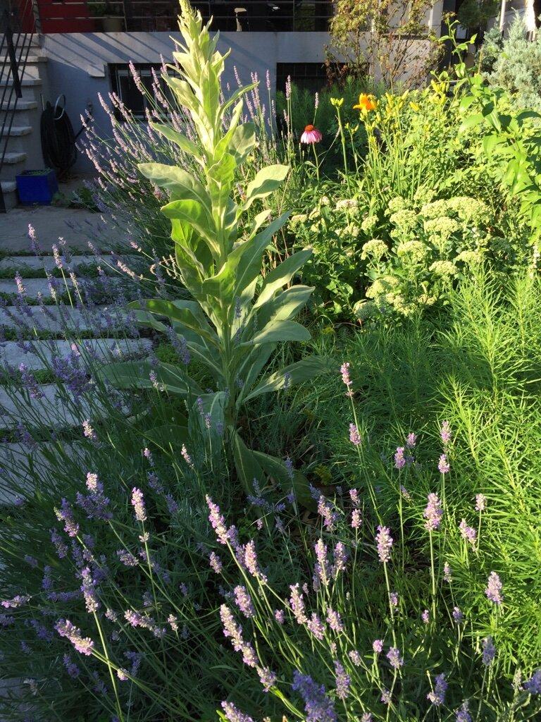 brooklyn_plant_studio_garden_109.jpg