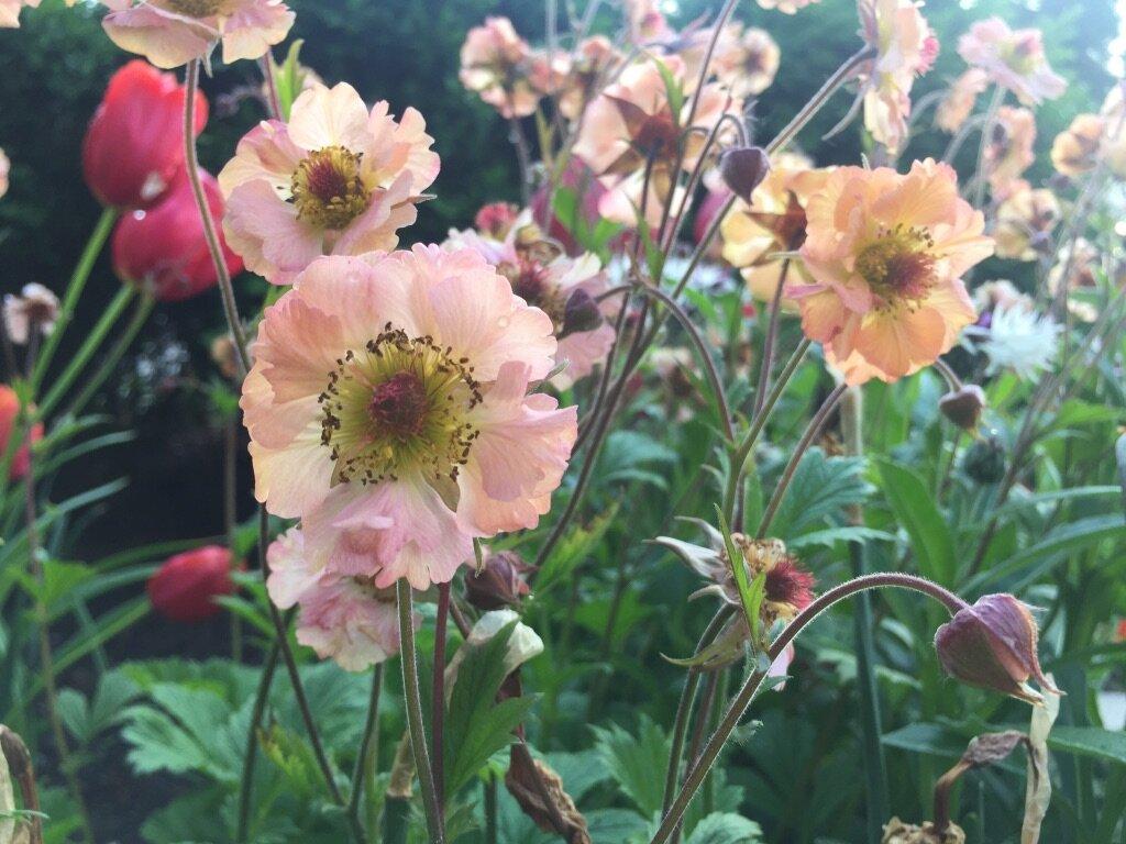 brooklyn_plant_studio_garden_114.jpg
