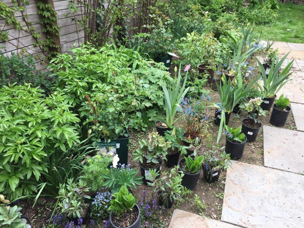 brooklyn_plant_studio_garden_115.jpg