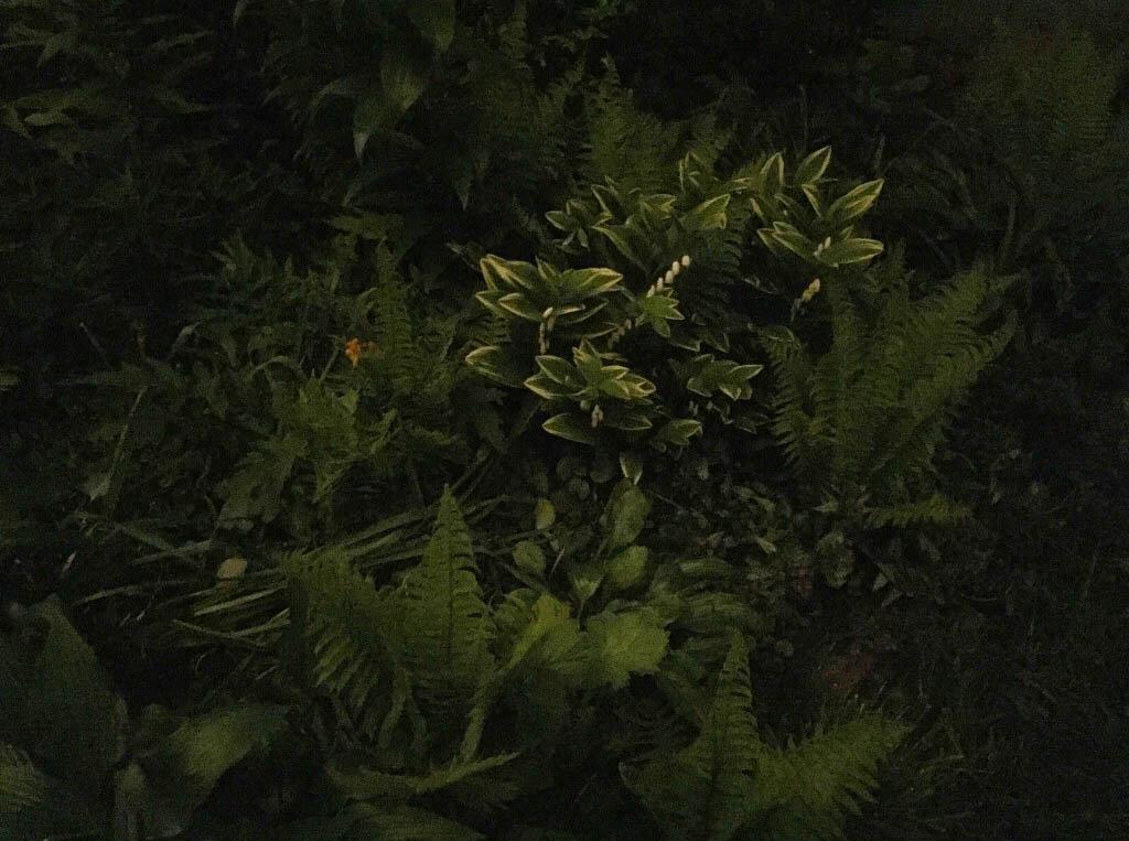 brooklyn_plant_studio_garden_82rev.jpg