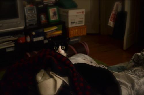 Gombotz the cat seems suspicious.