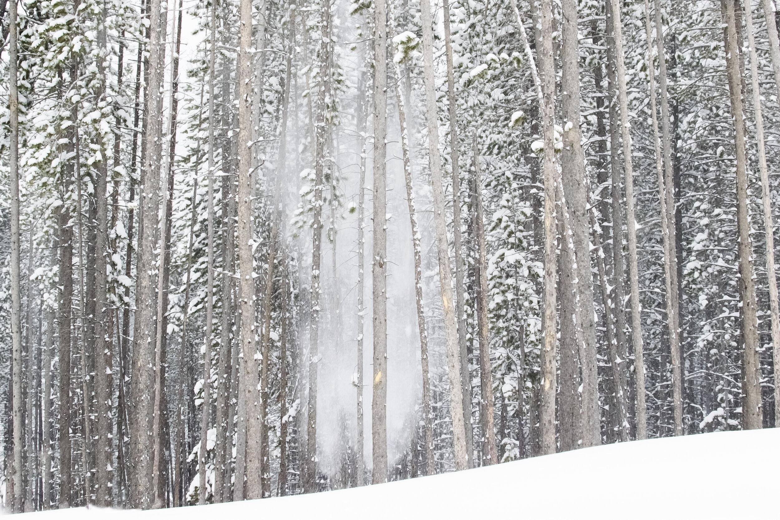 Snow_Falls_From_Trees-4543.jpg