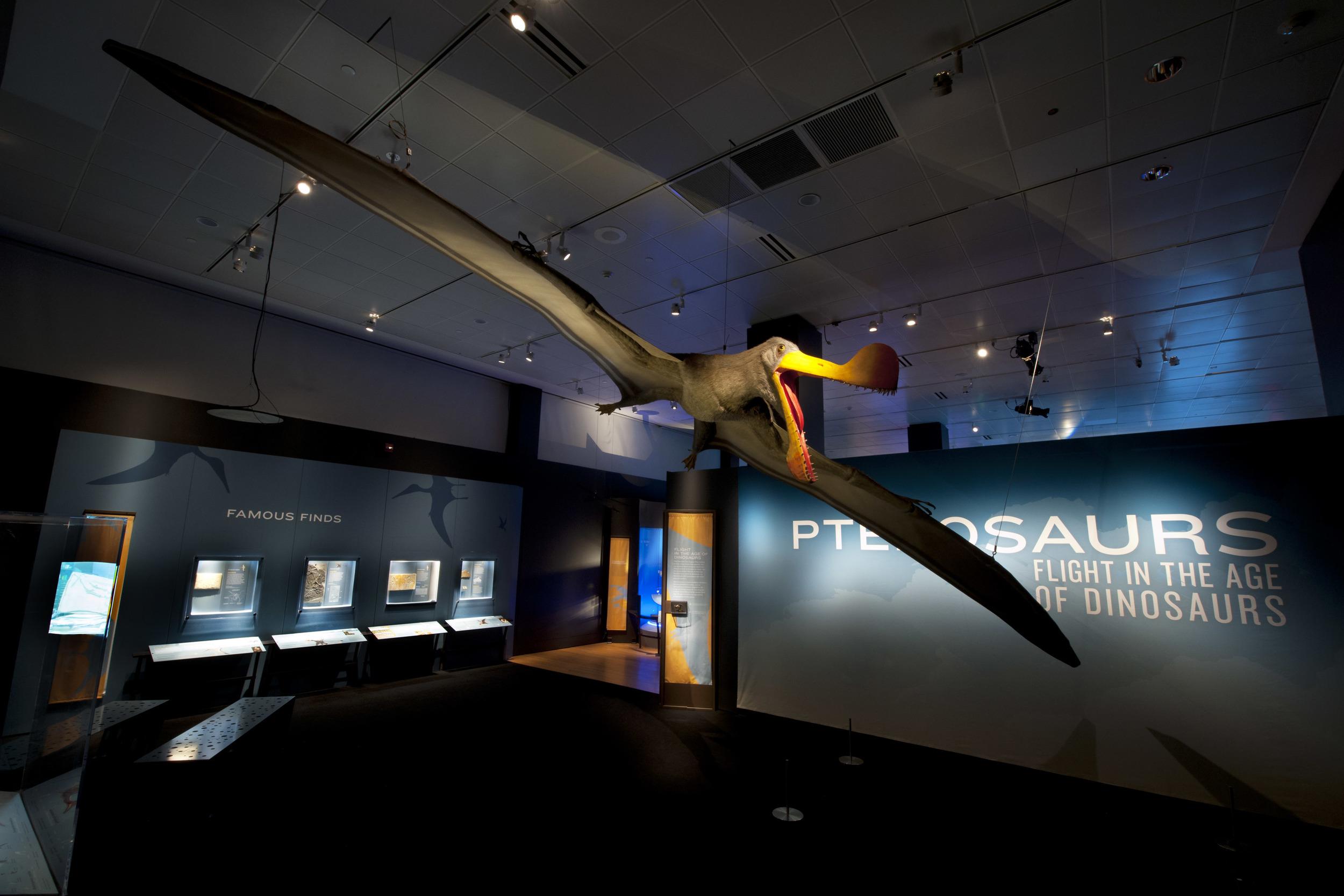 1. Pterosaurs entrance.jpg