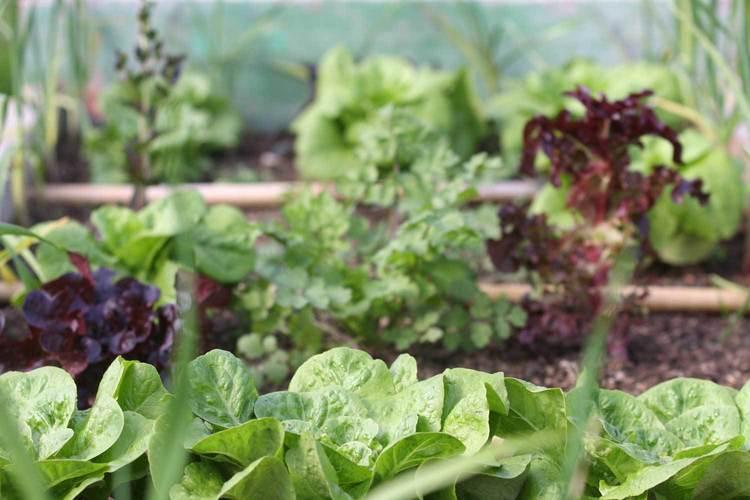 RUBI - Edible Garden.jpg