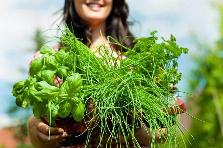 RUBI - Edible Garden 1.jpg