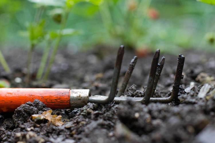 RUBI - Edible Garden 2.jpg