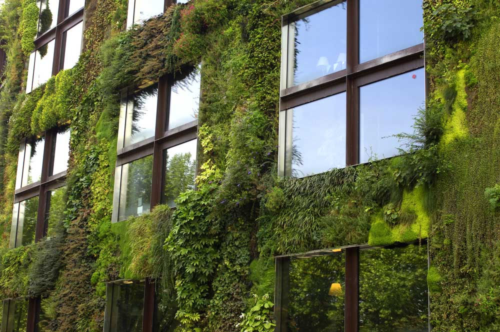RUBI-Landscape-Design-Vertical-Green-Wall.jpg