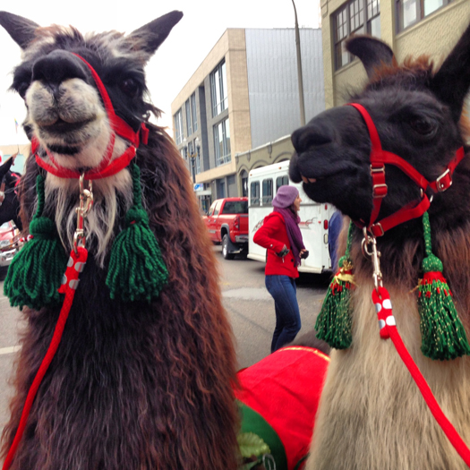 jessicaswift-llamas.JPG