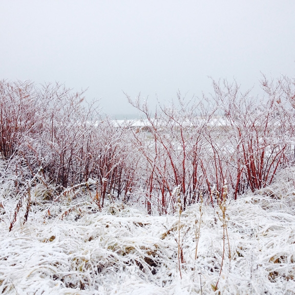 crab meadow beach winter.jpg
