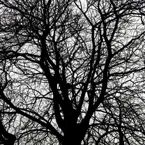 stephanielevy.berlin.trees.JPG