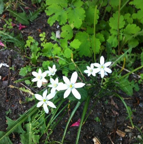 springblooms.stephanielevy