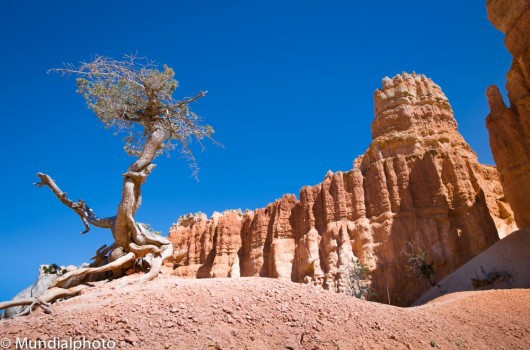 Bryce-Canyon-Cathedral-530x350.jpg