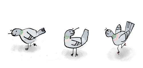 info_pigeons.jpg