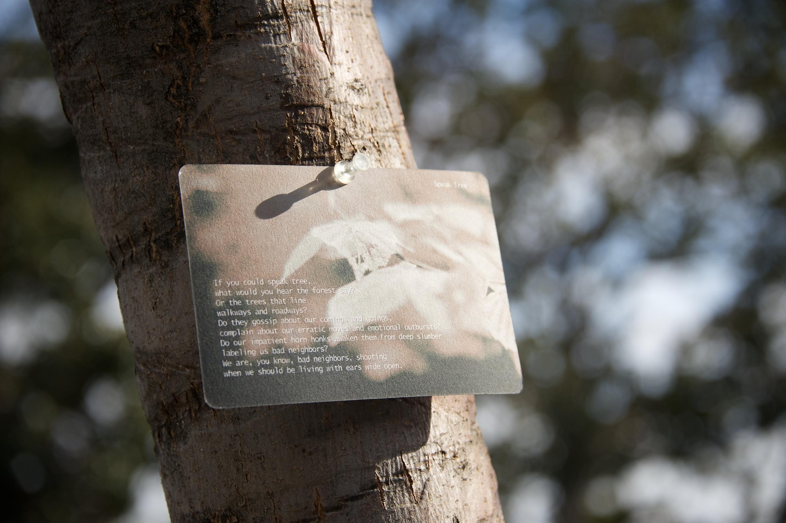 'Speak Tree' on Tujunga in Studio City.
