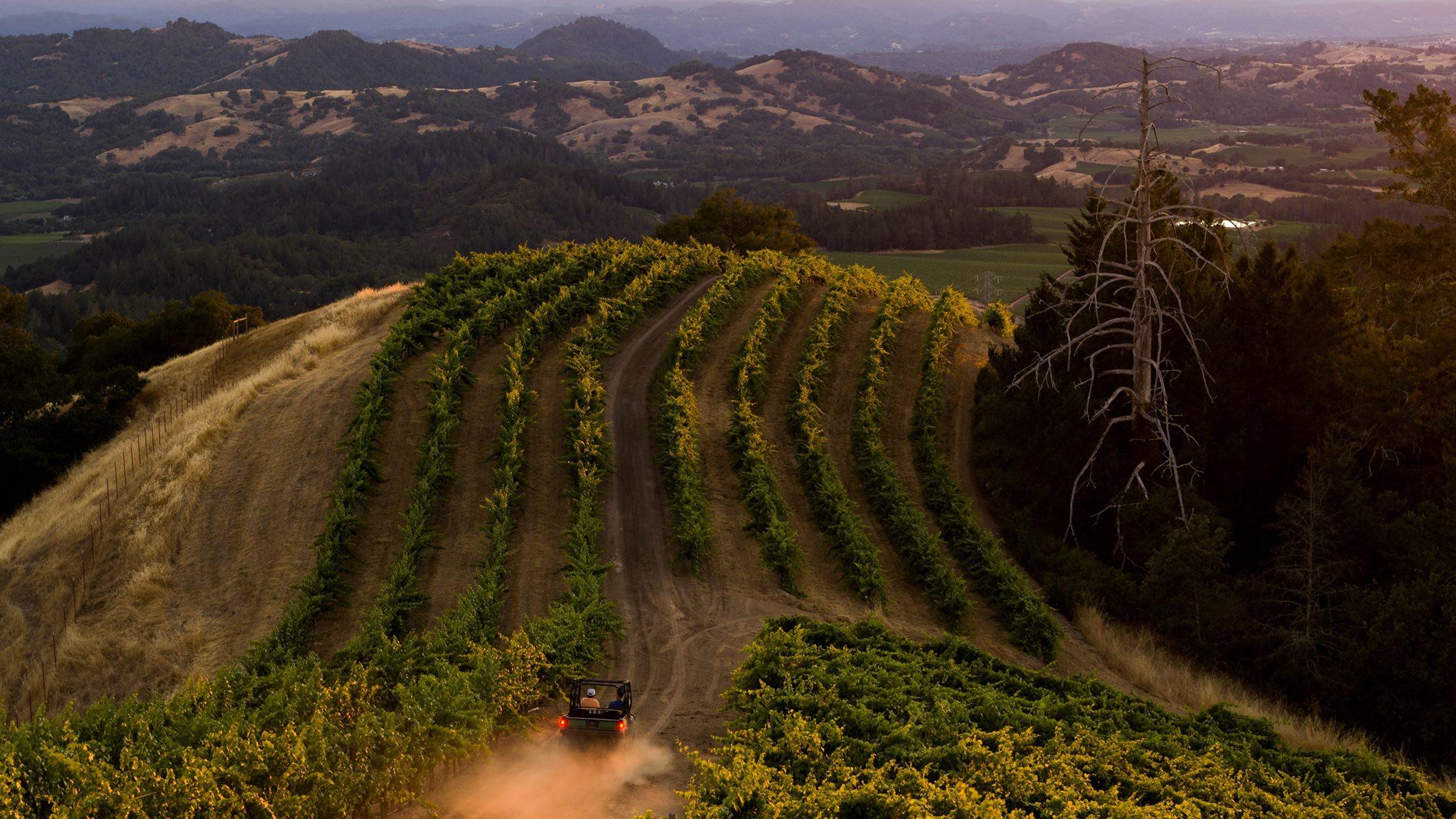 ferrari carano vineyards and winery certified california sustainable winegrowing002.jpg