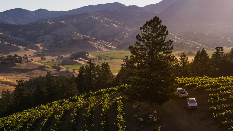 ferrari carano vineyards and winery certified california sustainable winegrowing003.jpg