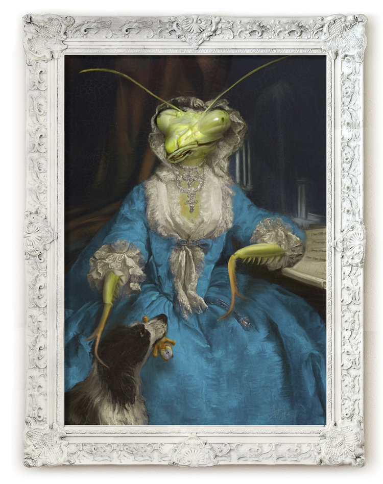 SIgned Limited Edition prints of Mantis Antoinette here    http://www.antfox.com/canvas-prints/mantis-antoinette