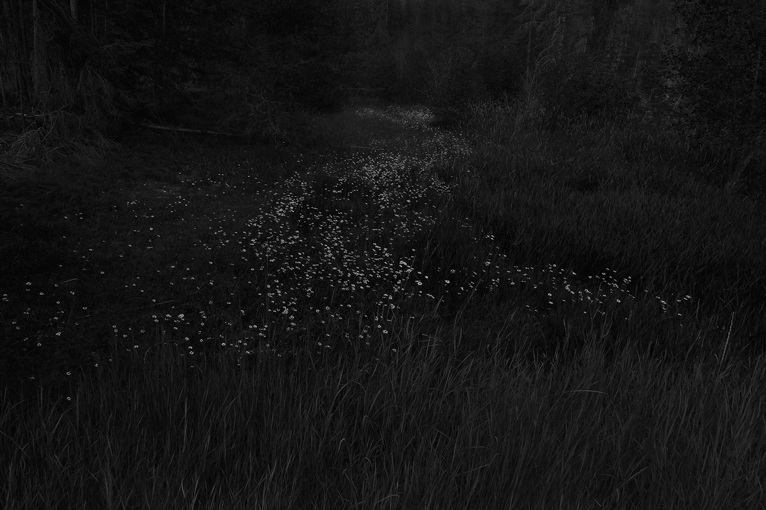 Trail  from series  The Forest , 2011-2014