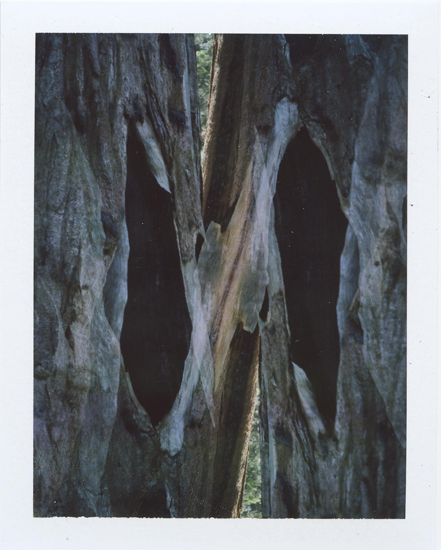 Parssi_Sequoia2.jpg