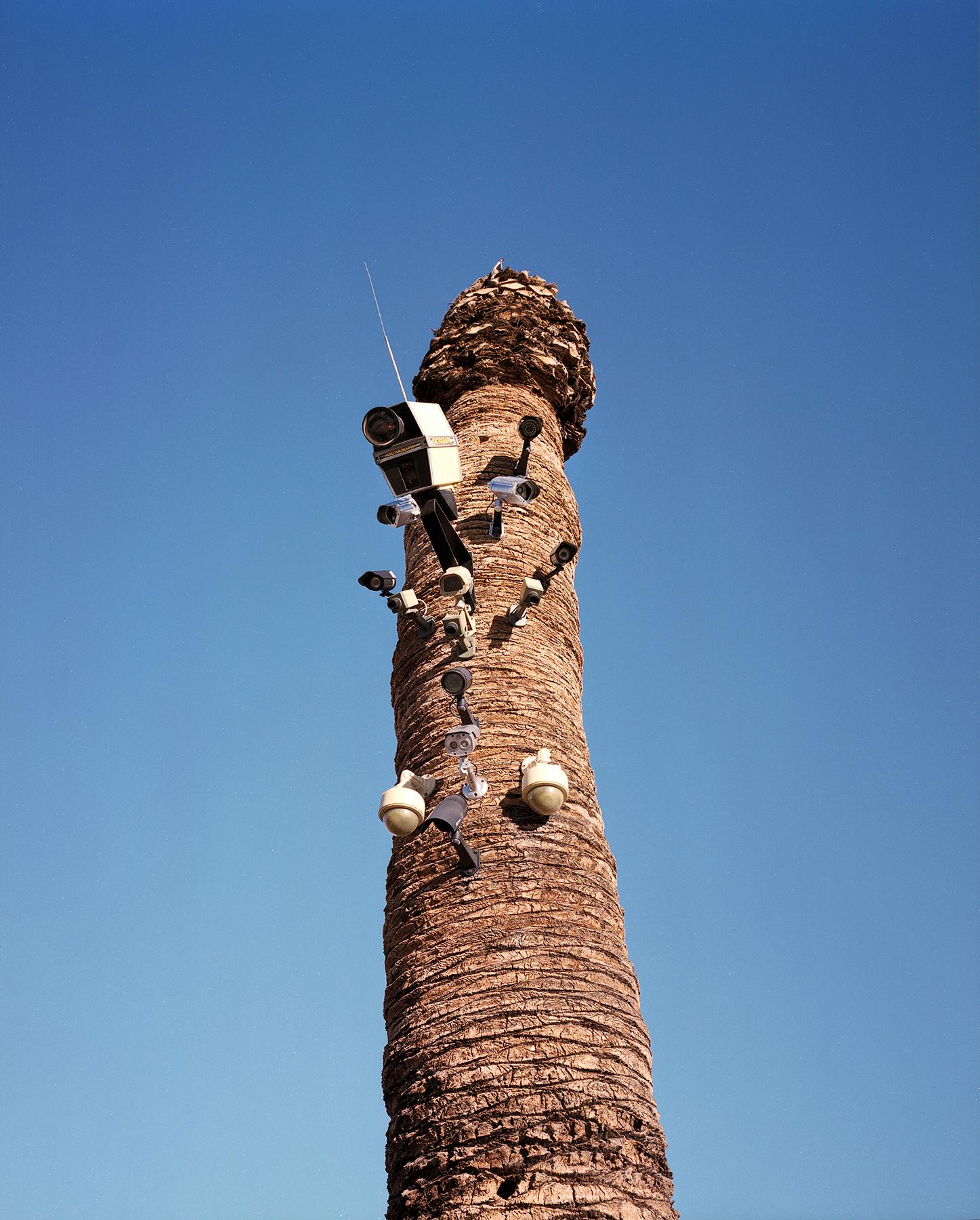 Palm Tree, 2018