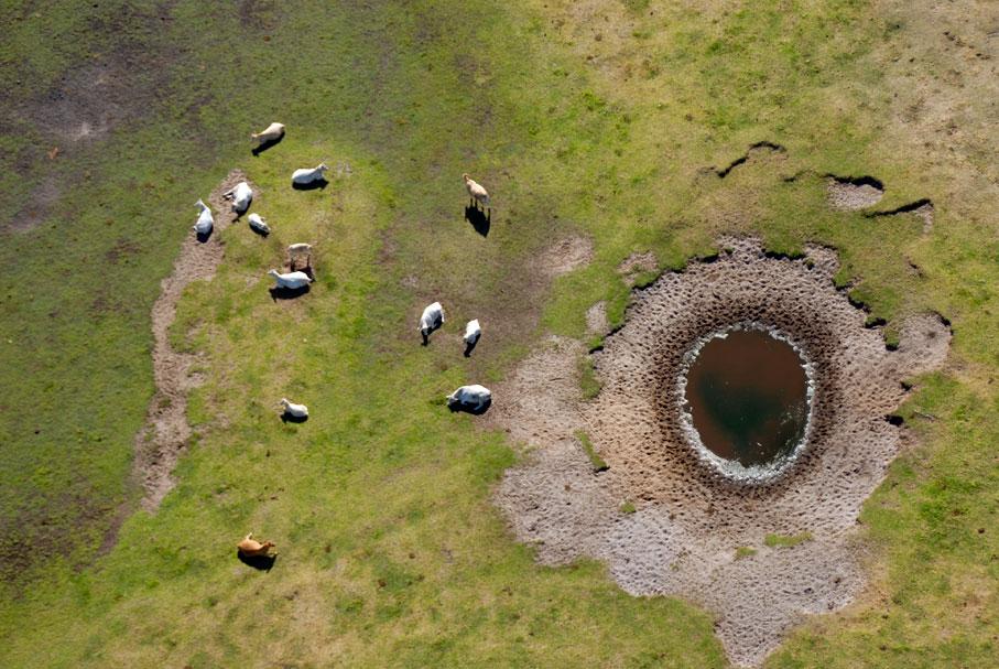 cattle_birdseye_water_hole.jpg