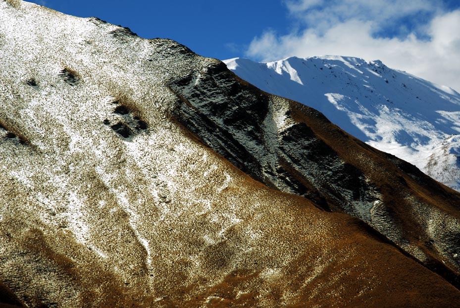 alpine_detail.jpg