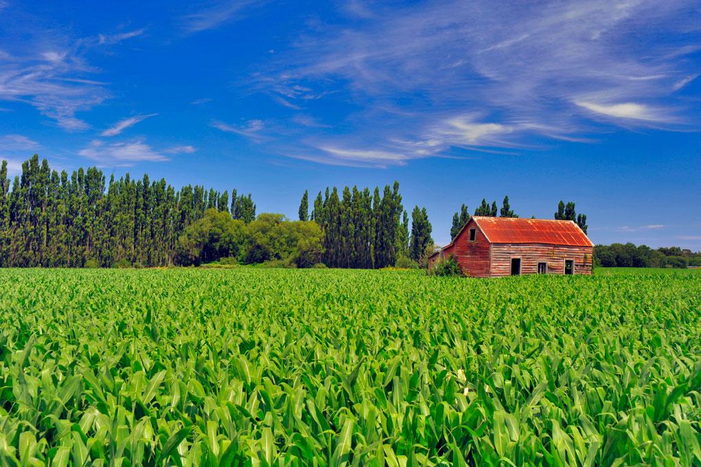 red_barn_caterton.jpg