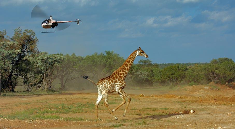 giraffe_robbie.jpg
