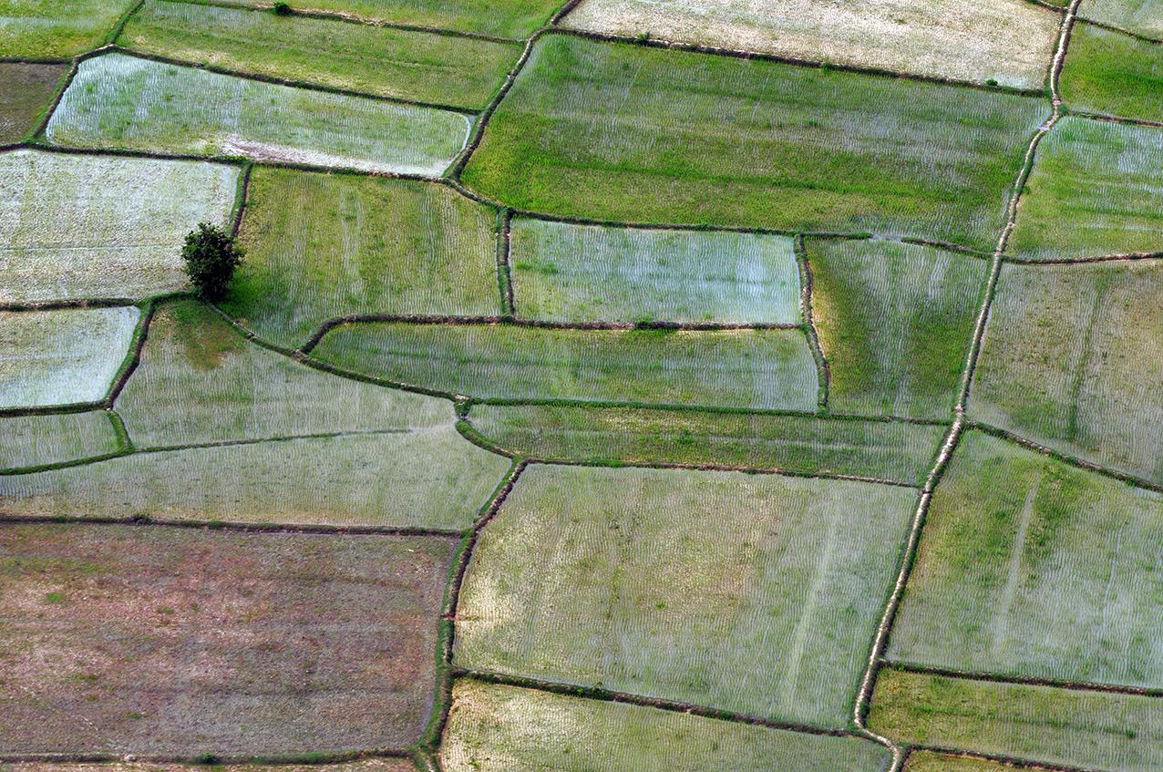 Rice fields, Cambodia