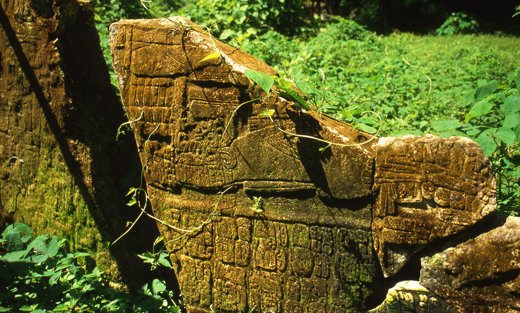Overgrown stelae, Yaxchilan, Guatemala