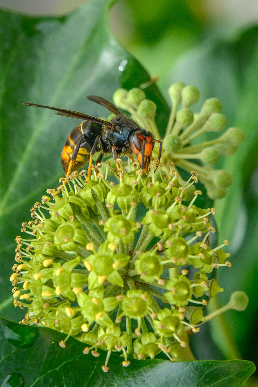 wasp_pollen_port.jpg