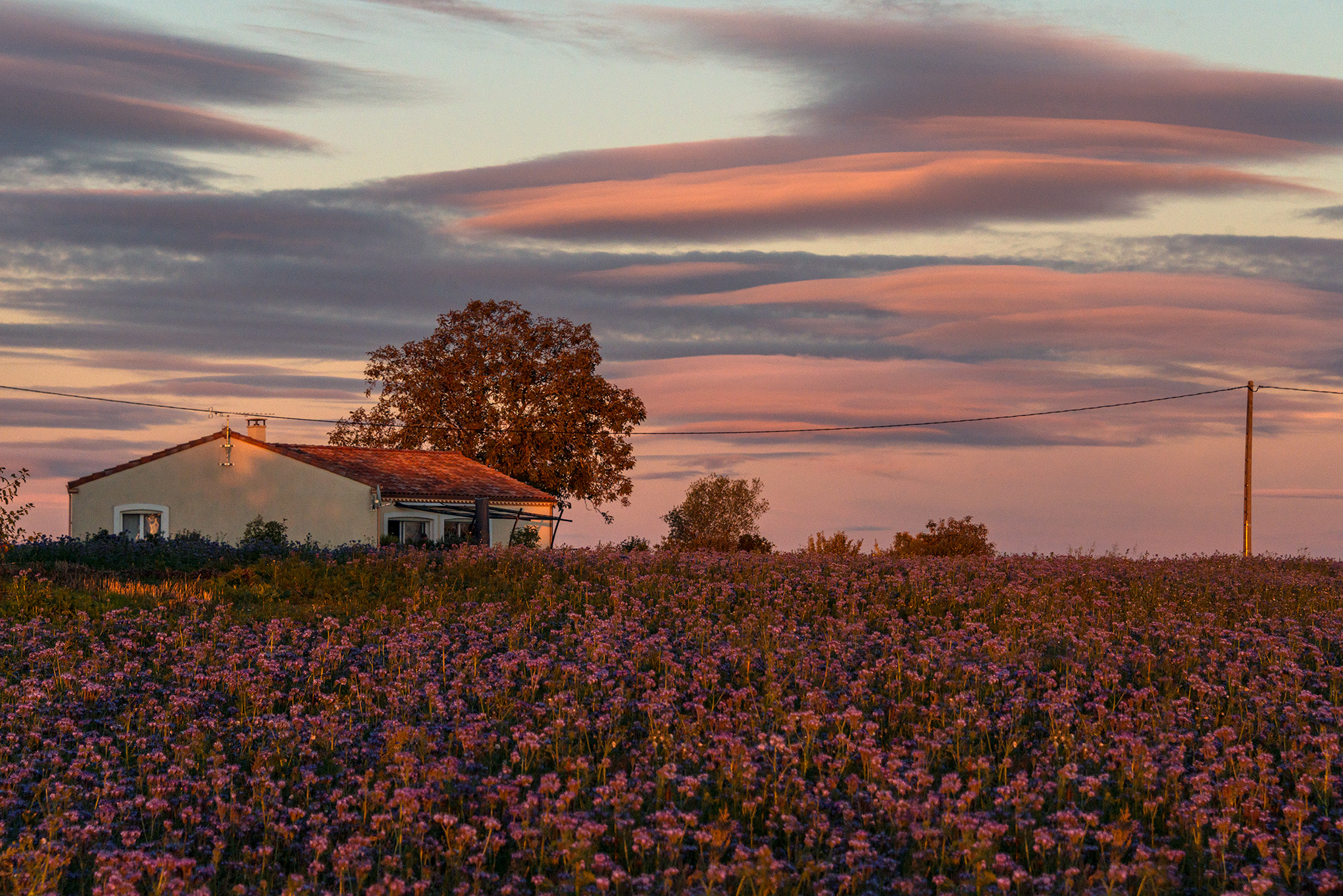 rural_pastel_colours_dusk.jpg
