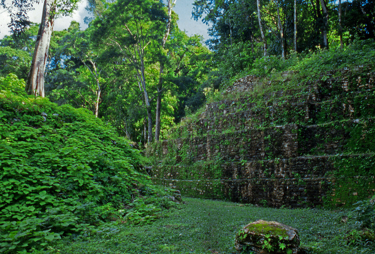 Overgrown Mayan temple, Yaxchilan, Chiapas State, Mexico