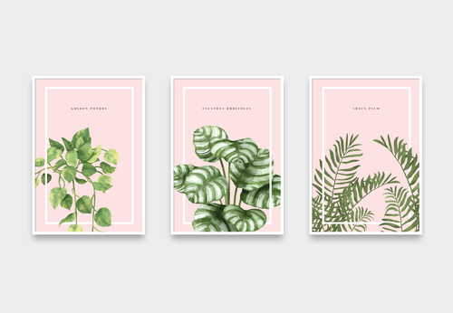 Plants - Cómpralos individuales o en grupo