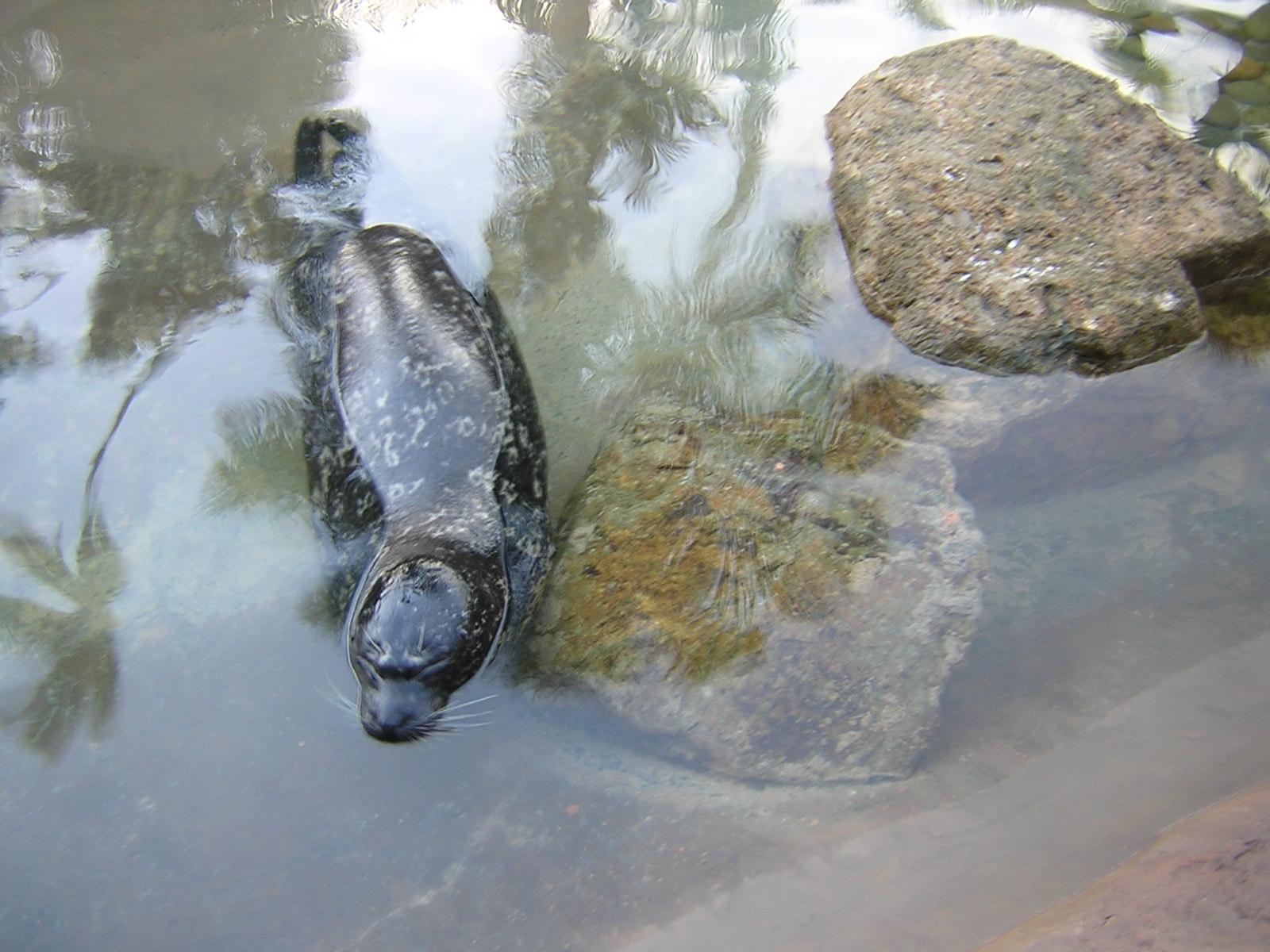 California seal.jpg